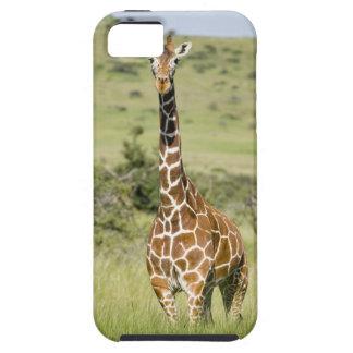 Kenya, Lewa Conservancy, Masai Giraffe standing iPhone 5 Cover