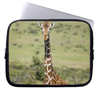 Kenya, Lewa Conservancy, Masai Giraffe standing Computer Sleeves