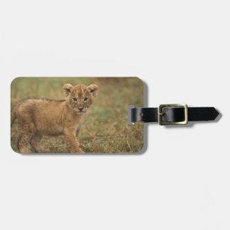 Kenya. Lion Cub (Panthera Leo) Luggage Tag