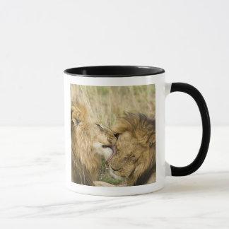 Kenya, Masai Mara. Close-up of one male lion Mug