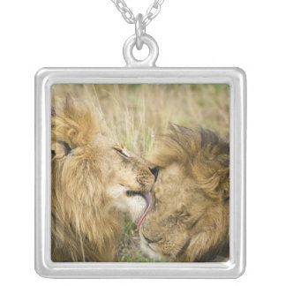 Kenya, Masai Mara. Close-up of one male lion Silver Plated Necklace