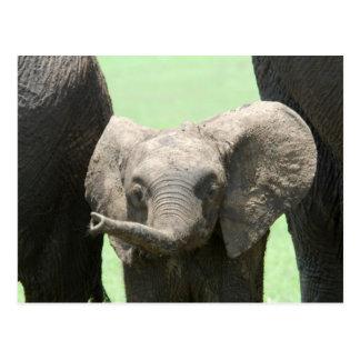 Kenya:  Masai Mara Game Reserve (also known as Postcard