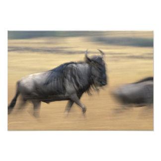 Kenya, Masai Mara Game Reserve, Blurred image Photographic Print