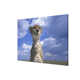 Kenya, Masai Mara Game Reserve, Close-up Canvas Print