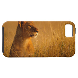 Kenya: Masai Mara Game Reserve, head of female iPhone 5 Case