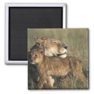 Kenya, Masai Mara Game Reserve, Lioness Square Magnet
