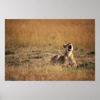Kenya, Masai Mara National Reserve, Lioness Poster