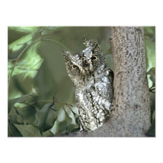 Kenya, Masai Mara Reserve. Close-up of Scops Photographic Print