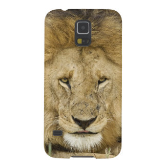 Kenya, Masai Mara. Two lions resting face to Galaxy S5 Cases