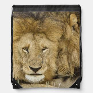 Kenya, Masai Mara. Two lions resting face to Drawstring Backpack