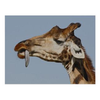 Kenya, Nakuru National Park. Rothschild's Postcard