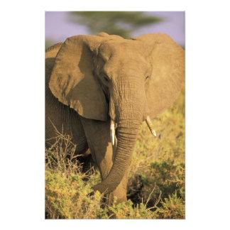 Kenya, Samburu National Reserve. African Art Photo