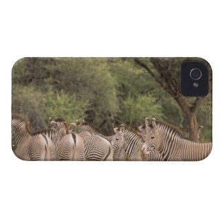 Kenya: Shaba National Reserve, herd of Grevy's iPhone 4 Cover