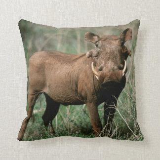 Kenya, Warthog looking at camera Throw Pillow