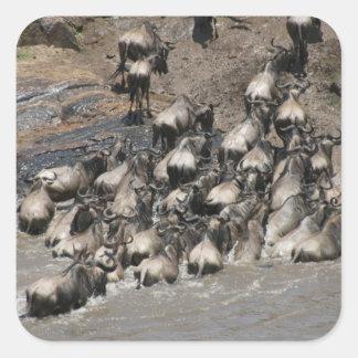 kenya wildebeest square sticker