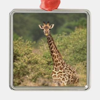 Kenyan giraffe metal ornament