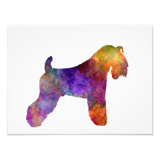 kerry Blue Terrier 01 in watercolor Photo Print