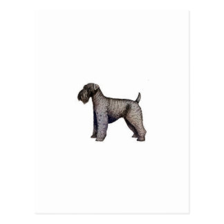 Kerry Blue Terrier Postcard