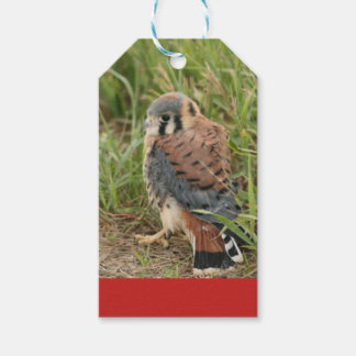 Kestrel Chick Gift Tag