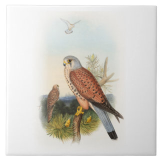 Kestrel Falcon John Gould Birds of Great Britain Tile