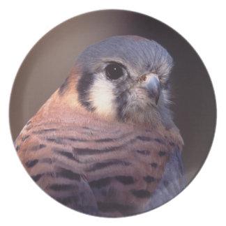 kestrel, falcon plates