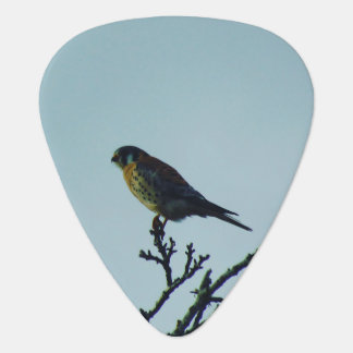Kestrel Guitar Pick
