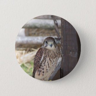 Kestrel perched on a fence post 2 inch round button