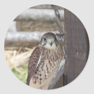 Kestrel perched on a fence post classic round sticker