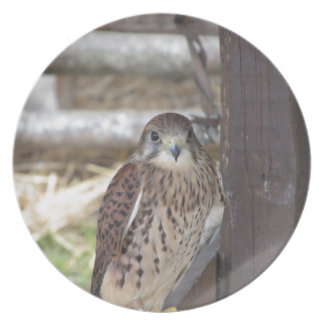 Kestrel perched on a fence post dinner plates