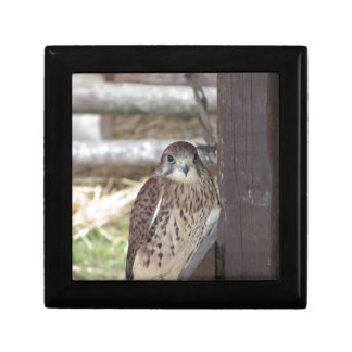 Kestrel perched on a fence post gift box