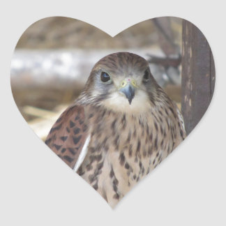 Kestrel perched on a fence post heart sticker