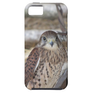 Kestrel perched on a fence post iPhone 5 case