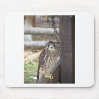 Kestrel perched on a fence post mouse pad