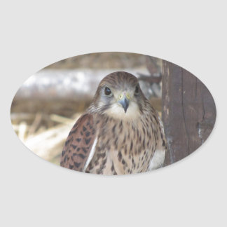 Kestrel perched on a fence post oval sticker