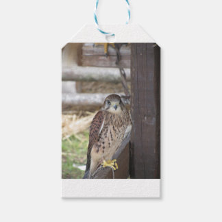 Kestrel perched on a fence post pack of gift tags