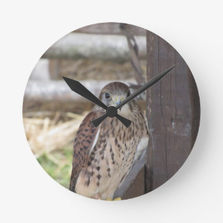 Kestrel perched on a fence post round clock