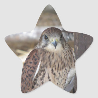 Kestrel perched on a fence post star sticker