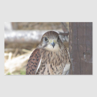 Kestrel perched on a fence post sticker