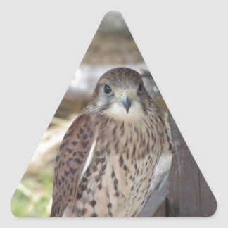 Kestrel perched on a fence post triangle sticker