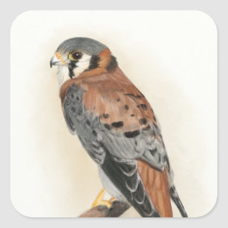 Kestrel Square Sticker