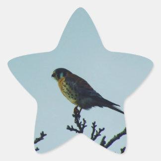 Kestrel Star Sticker