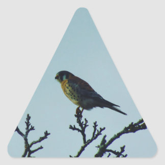 Kestrel Triangle Sticker