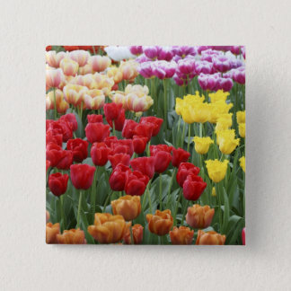 Keukenhof Gardens, Holland, specializes in 2 2 Inch Square Button