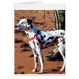 Kevin The Dalmatian Card
