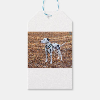 Kevin The Dalmatian Gift Tags