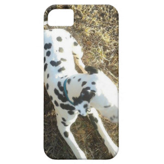 Kevin The Dalmatian iPhone 5 Case