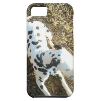 Kevin The Dalmatian iPhone 5 Cases