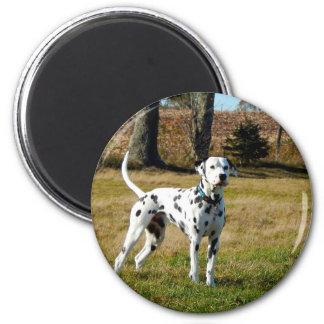 Kevin the Dalmatian Magnet