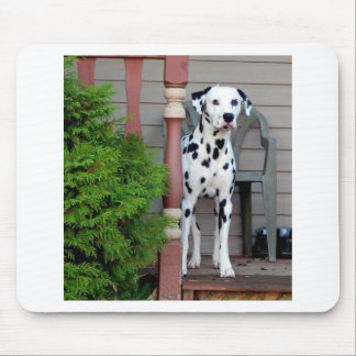 Kevin the Dalmatian Mouse Pad