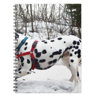 Kevin The Dalmatian Notebook